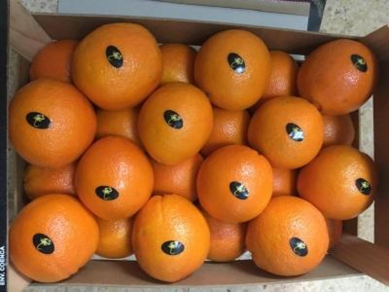 Продаем апельсины из Испании - 4