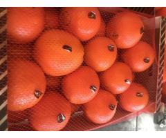 Продаем апельсины из Испании - Image 5