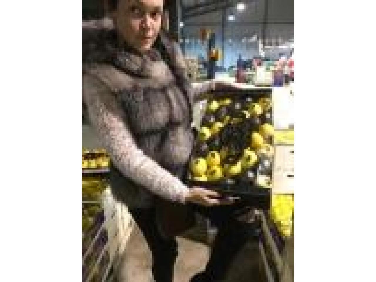 Продаем лимоны из Испании - 1