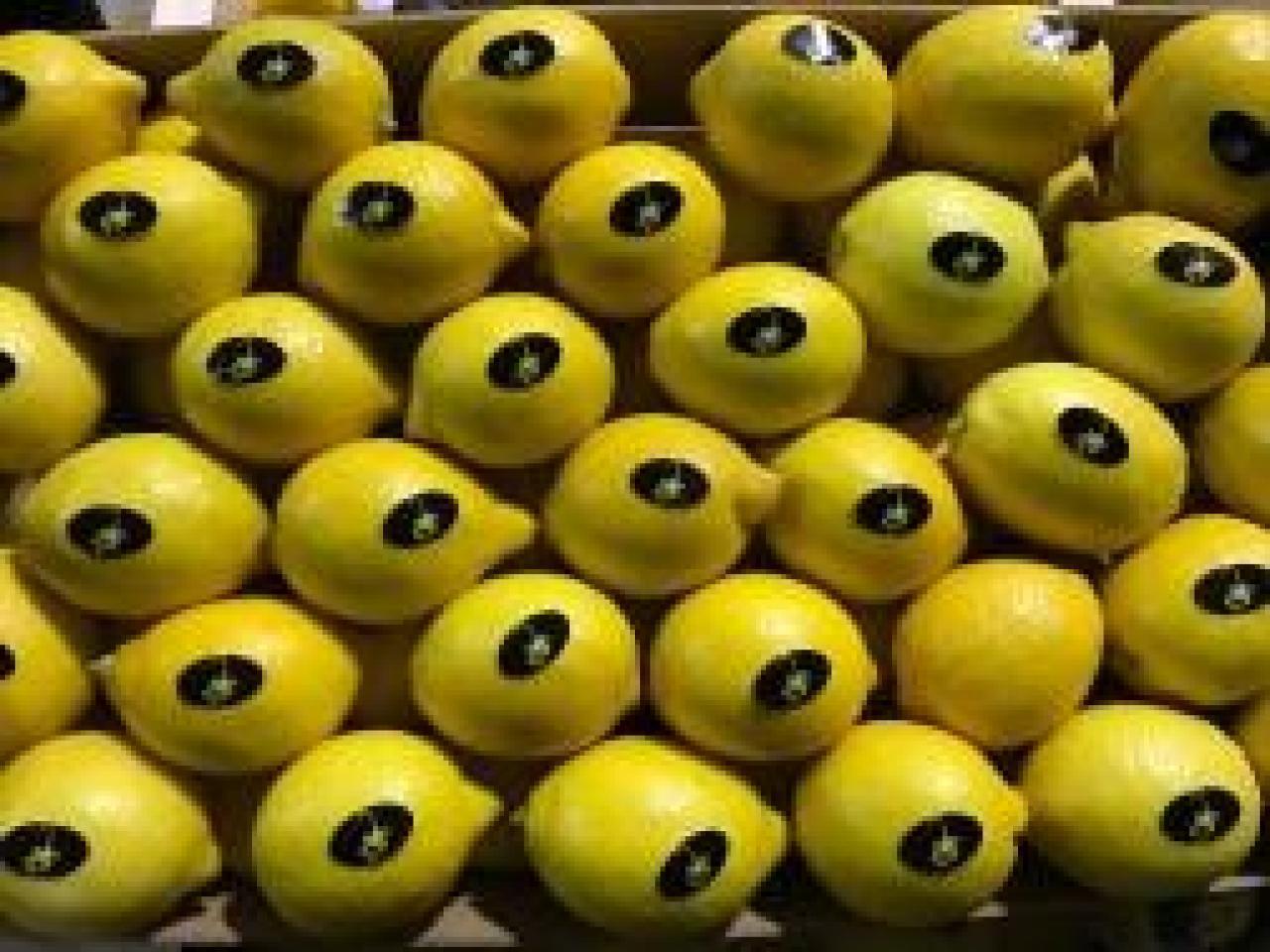 Продаем лимоны из Испании - 5