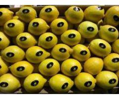 Продаем лимоны из Испании - Image 5
