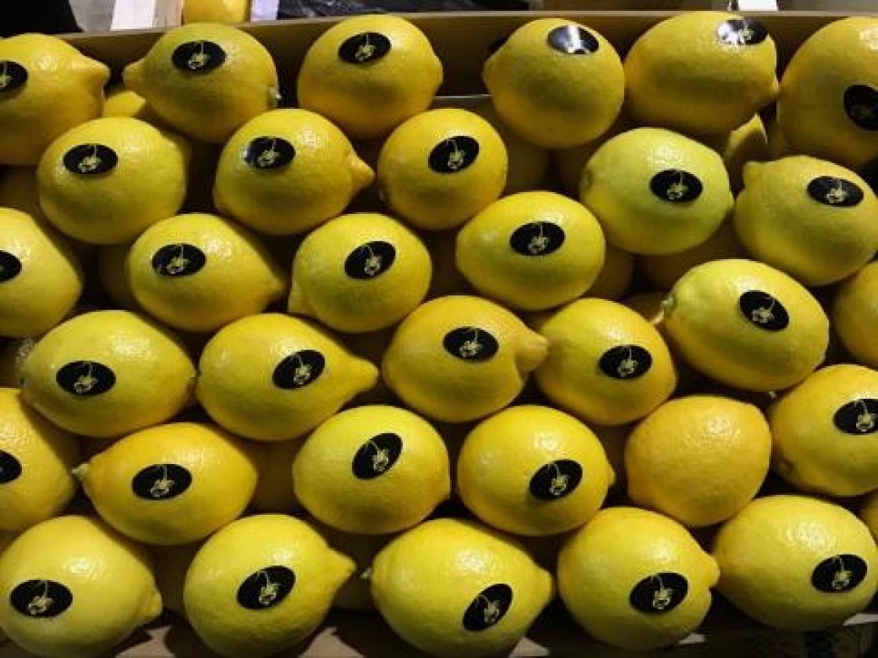 Продаем лимоны из Испании - 6
