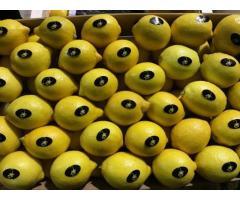 Продаем лимоны из Испании - Image 6
