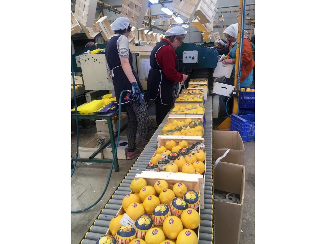 Продаем лимоны из Испании - 8