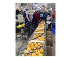 Продаем лимоны из Испании - Image 8