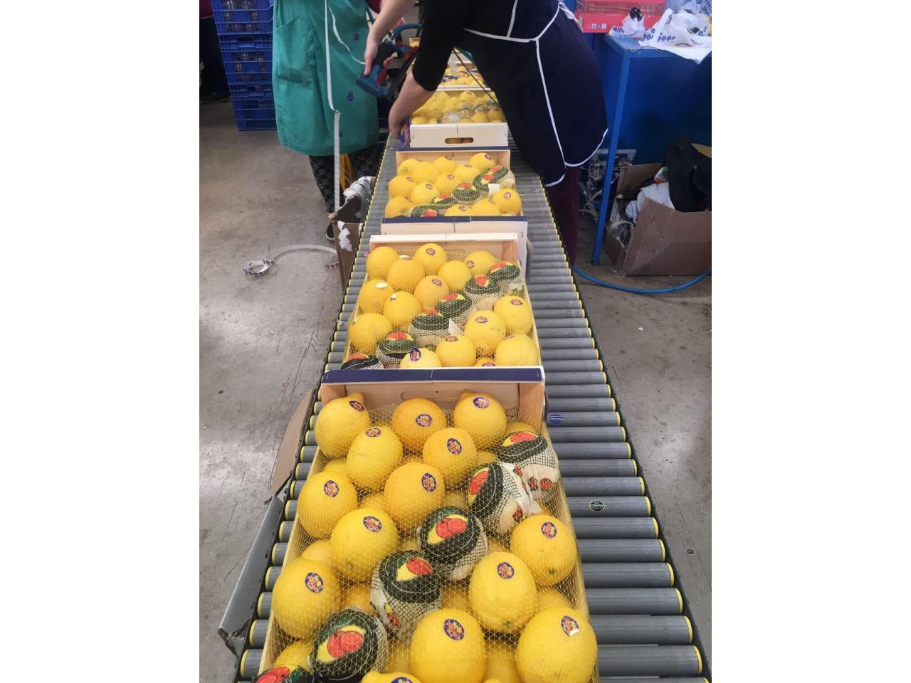 Продаем лимоны из Испании - 9