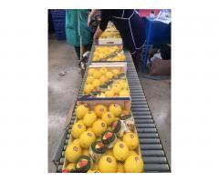 Продаем лимоны из Испании - Image 9