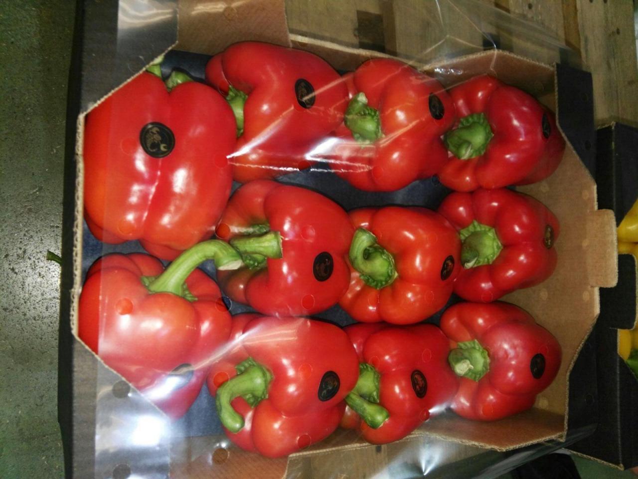 Продаем перец из Испании - 2