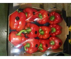 Продаем перец из Испании - Image 2