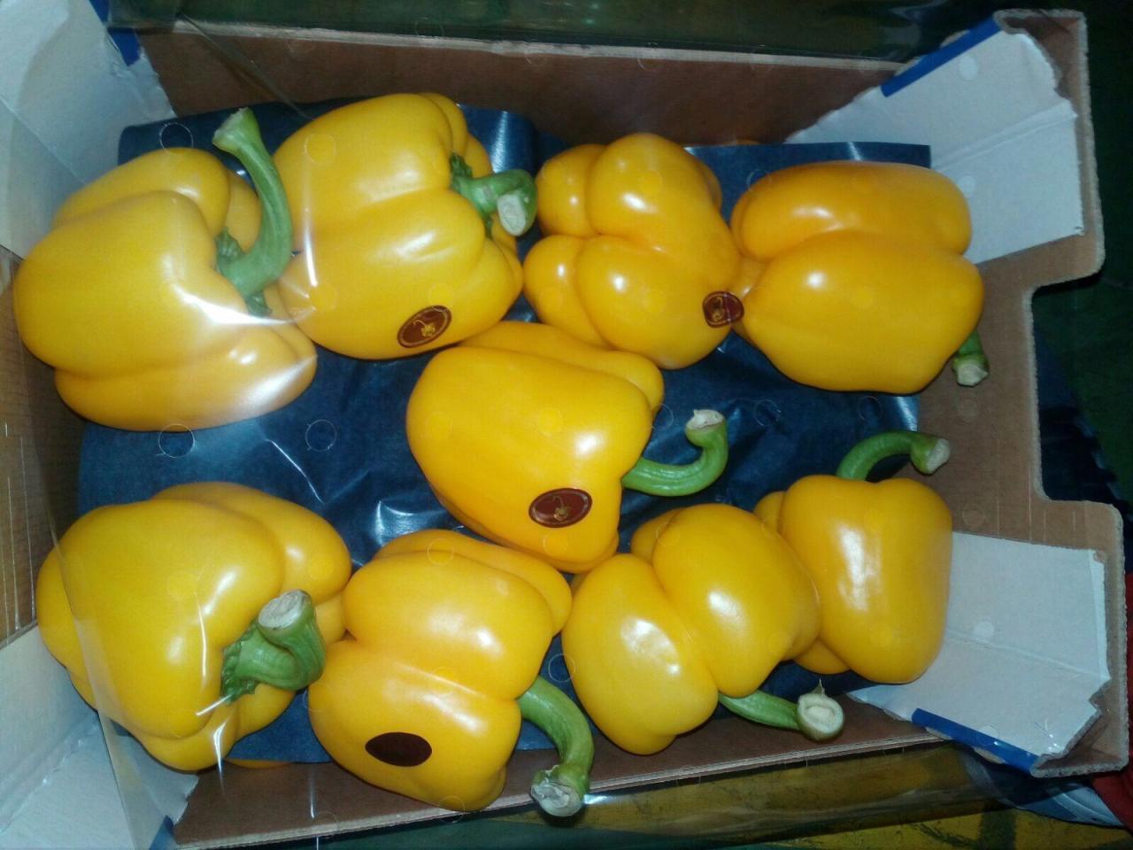 Продаем перец из Испании - 8