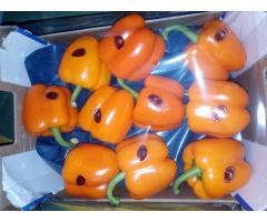 Продаем перец из Испании - Image 9