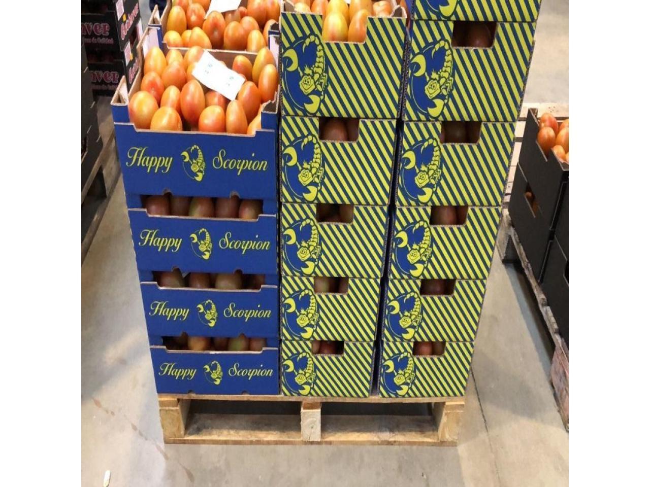 Продаем томаты из Испании - 1