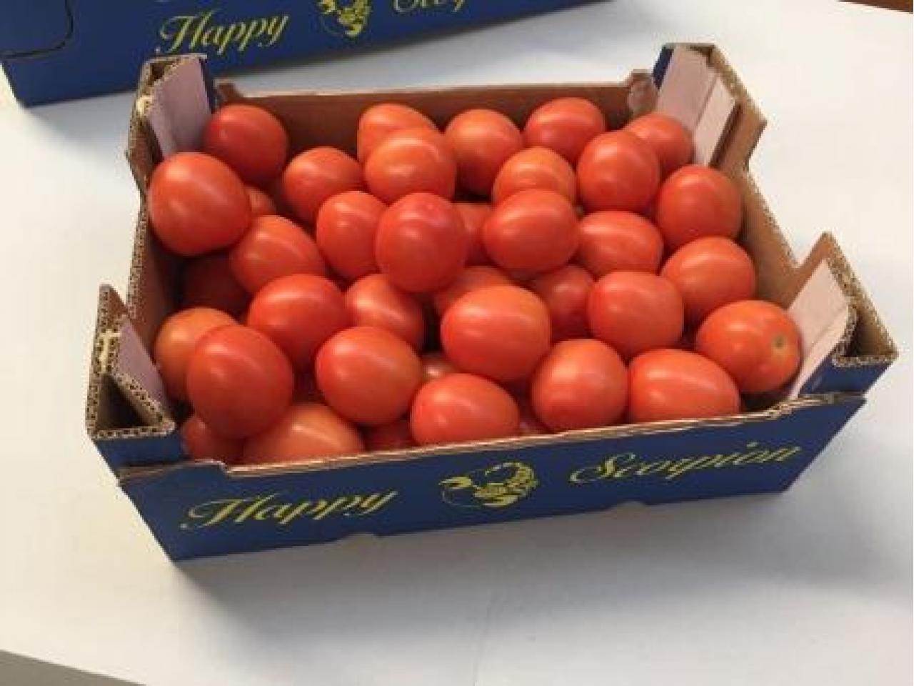 Продаем томаты из Испании - 3