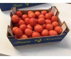 Продаем томаты из Испании - Image 3