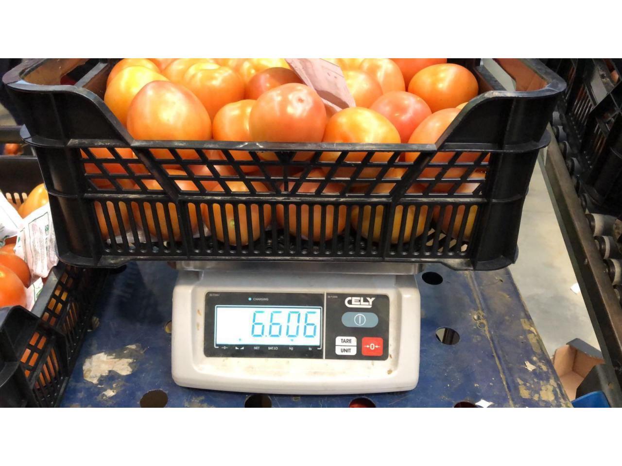 Продаем томаты из Испании - 4