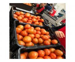 Продаем томаты из Испании - Image 5