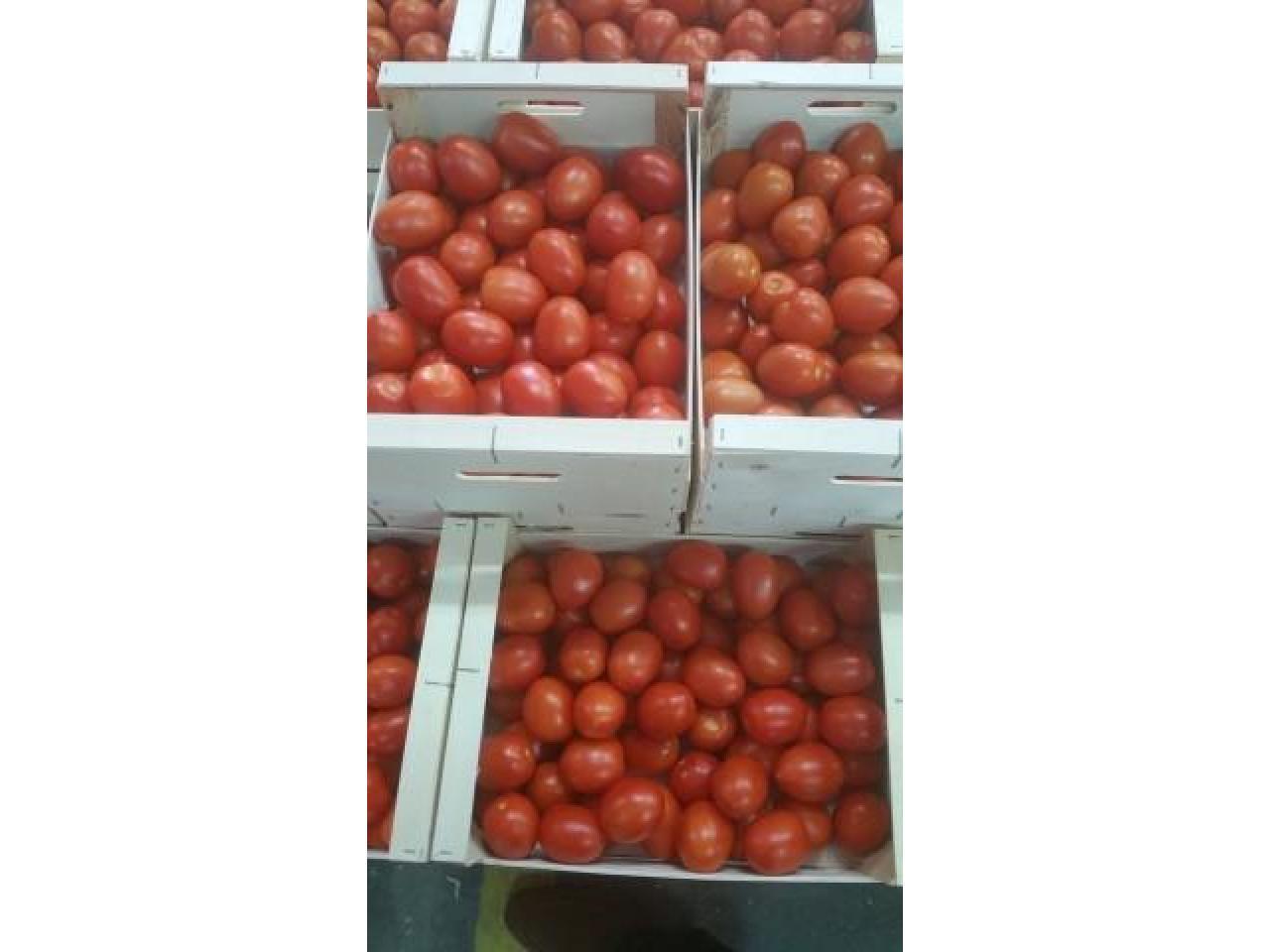 Продаем томаты из Испании - 6