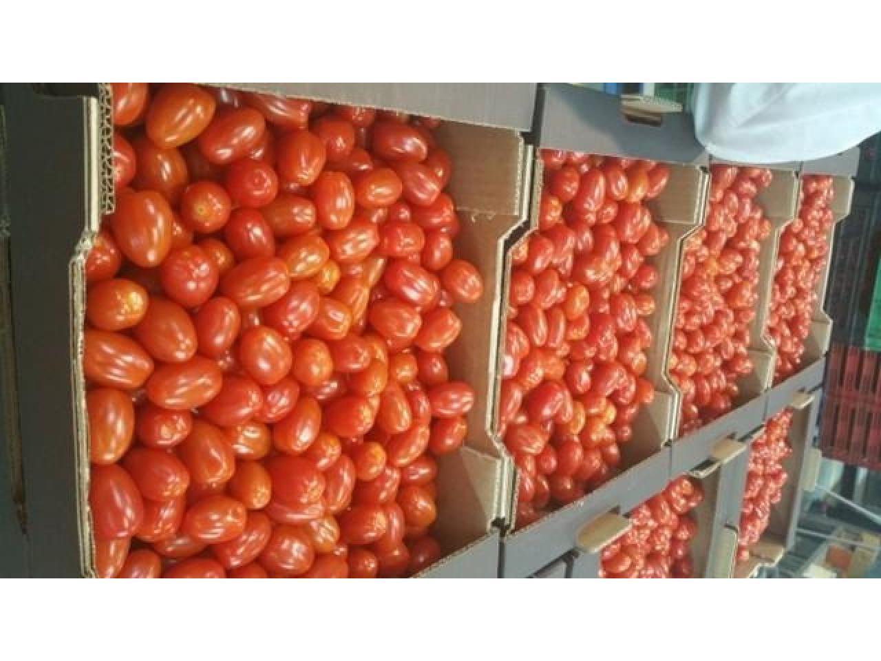 Продаем томаты из Испании - 8