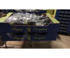 Продаем баклажан из Испании - Image 1