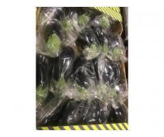Продаем баклажан из Испании - Image 8