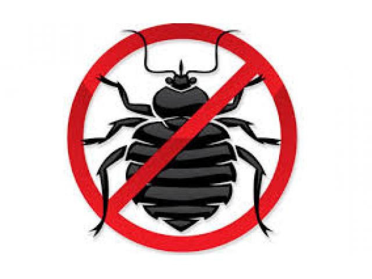 Предлагаем избавится от любых видов вредных насекомых! - 1