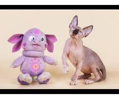 """""""Лунные"""" котята породы канадский сфинкс. - Image 8"""