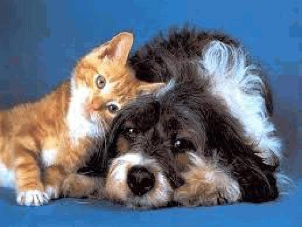 Товары для животных - 1