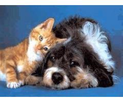 Товары для животных - Image 1