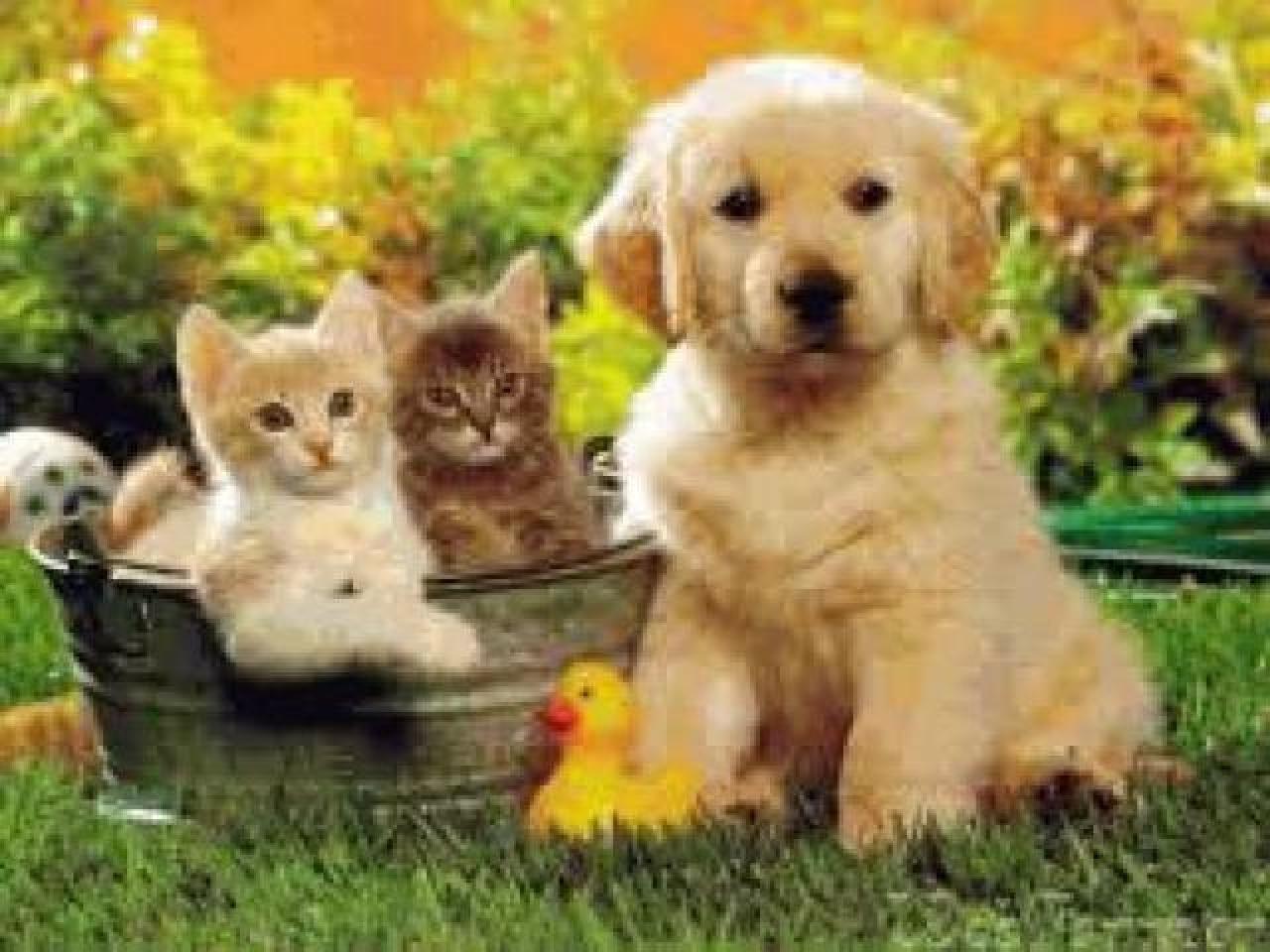 Товары для животных - 2