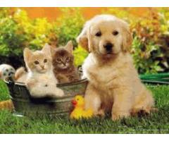 Товары для животных - Image 2