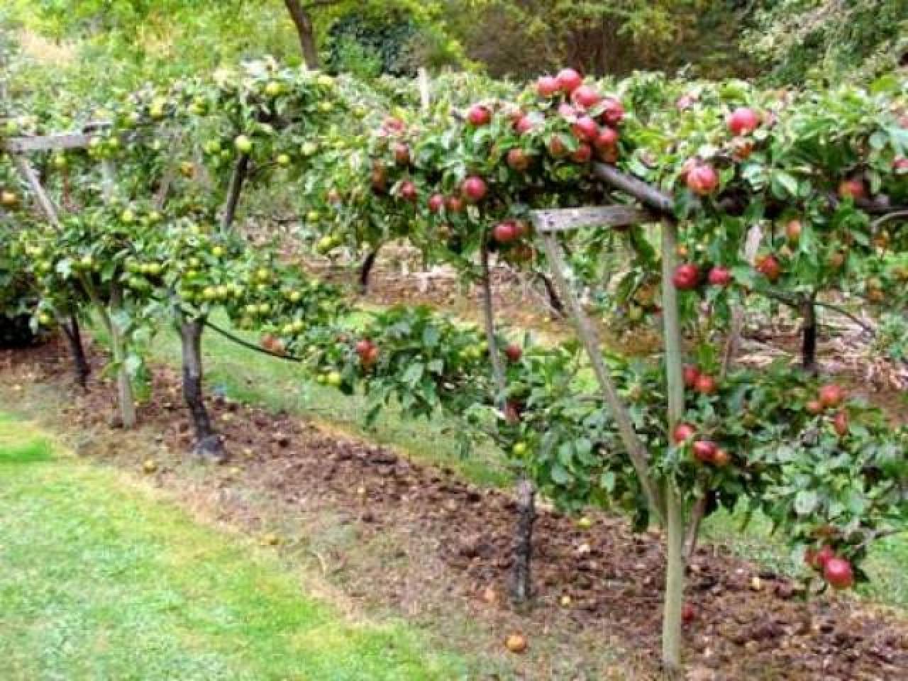 Ищут работу Специалист ищет работу садовника. Садовый дизайн. London Доска Объявлений Англии
