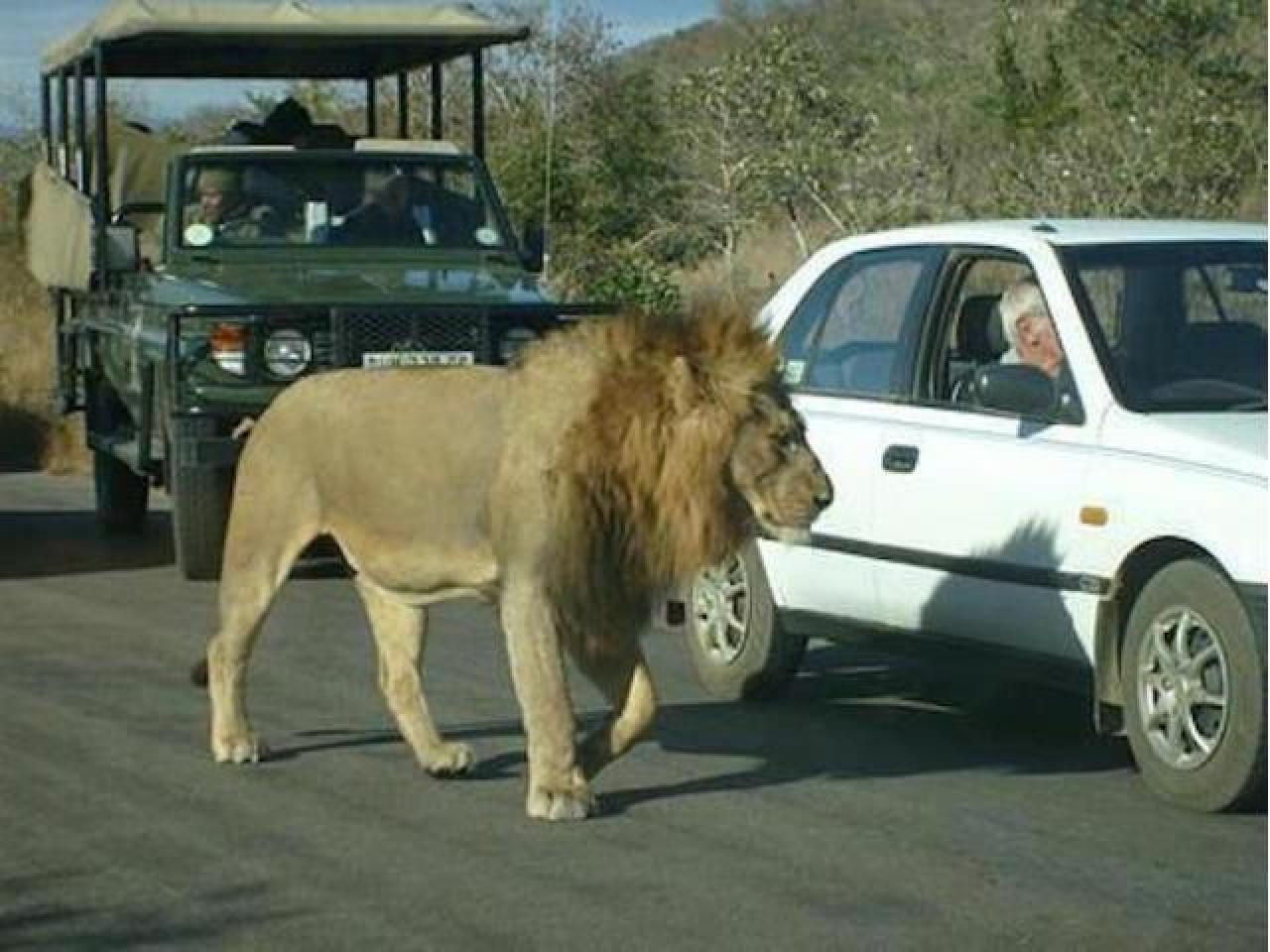 Путешествие в Африку.Туры в ЮАР. - 2