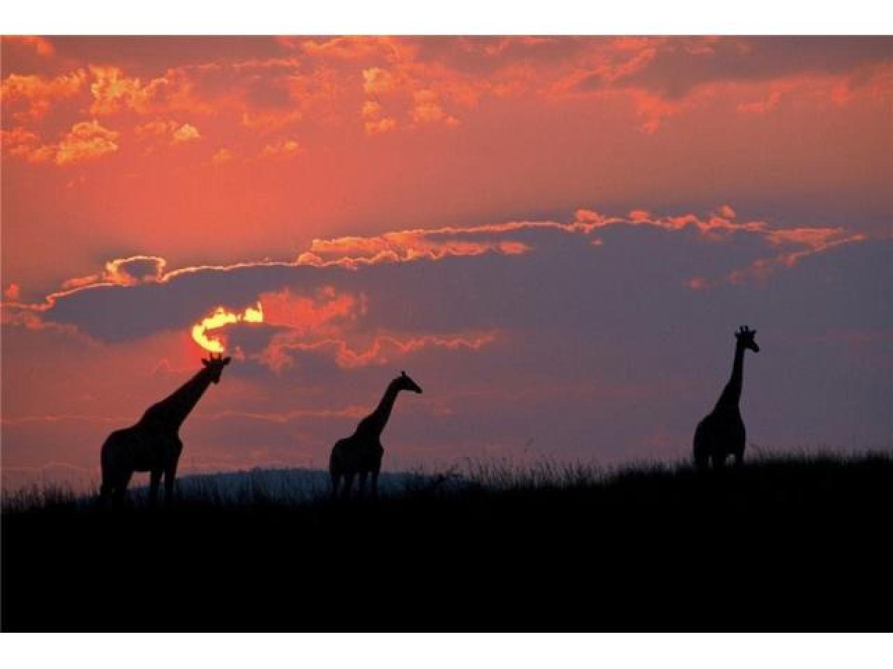 Путешествие в Африку.Туры в ЮАР. - 7
