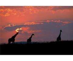 Путешествие в Африку.Туры в ЮАР. - Image 7