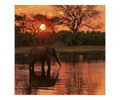 Путешествие в Африку.Туры в ЮАР. - Image 12