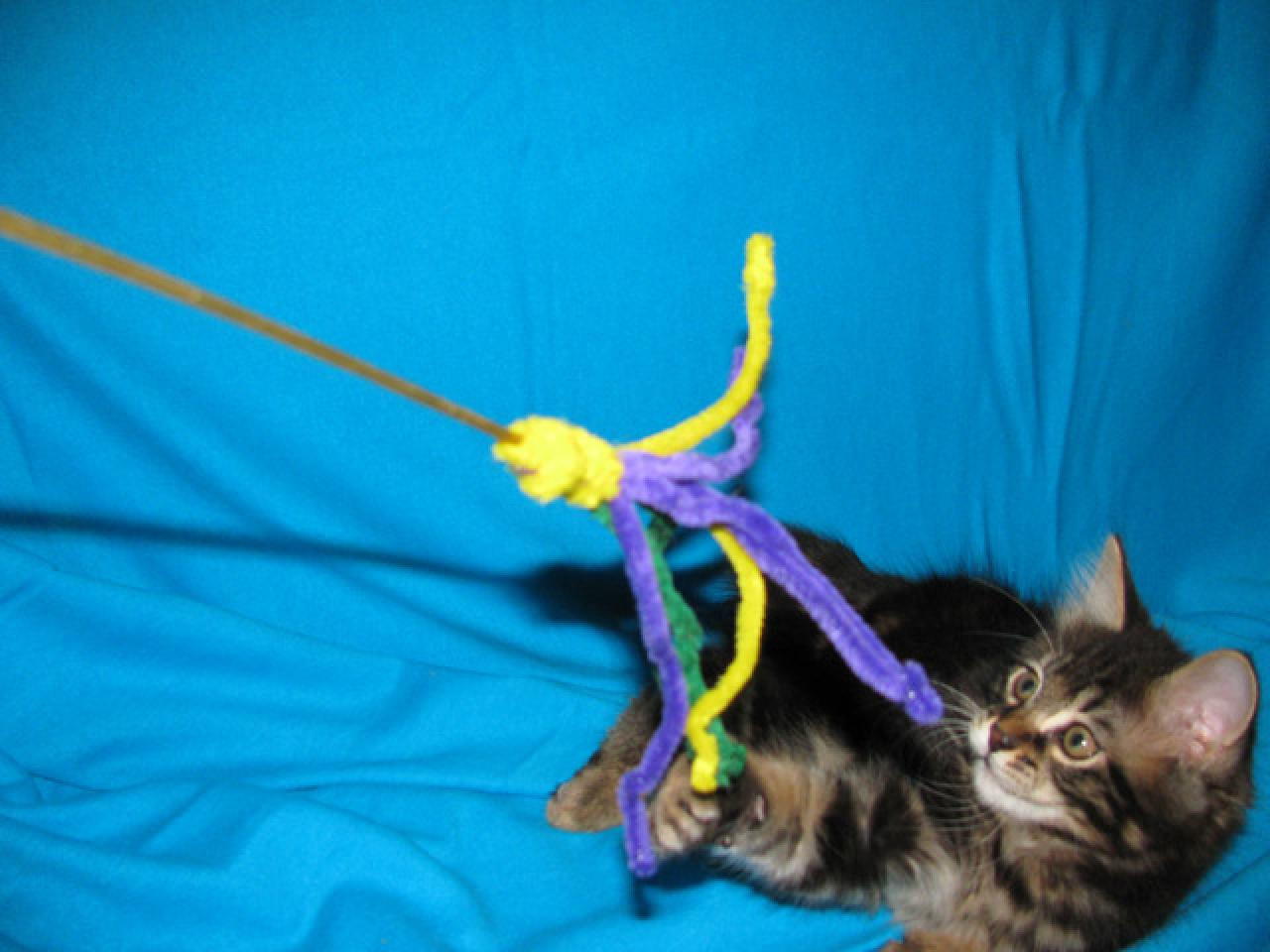 Продаются котята курильского бобтейла - 1