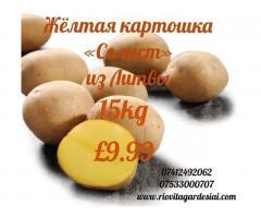 Жёлтая  картошка и другие продукты