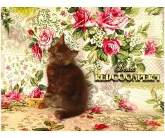 Котёнок мейн кун красный. Шоу класс. Из питомника - Image 5