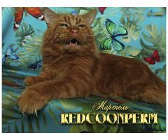 Котёнок мейн кун красный. Шоу класс. Из питомника - Image 12