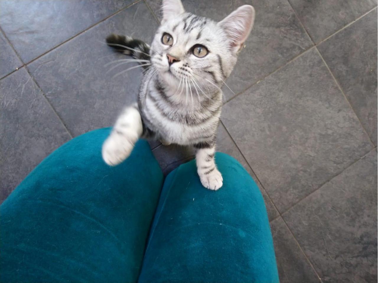 Котята 6 месяцев породистые, регистрированы с микрочипом - 6