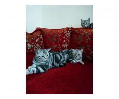 Котята 6 месяцев породистые, регистрированы с микрочипом - Image 7